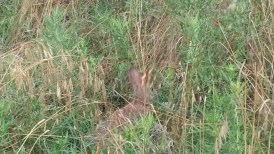 Rabbit at Wichita Mountains Wildlife Refuge