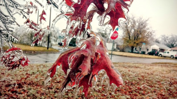 Leaves covered in Ice in Oklahoma
