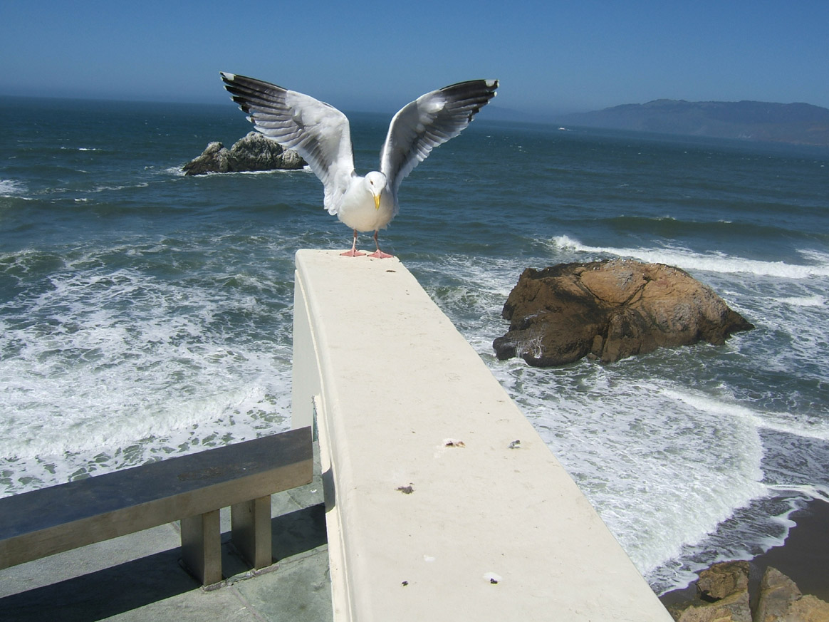 Flight of the Seagull 2