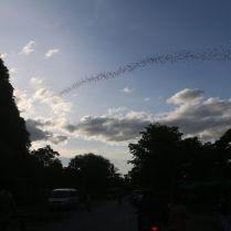 Bat Cave à Battambang