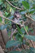 la forêt des singes - Ubud