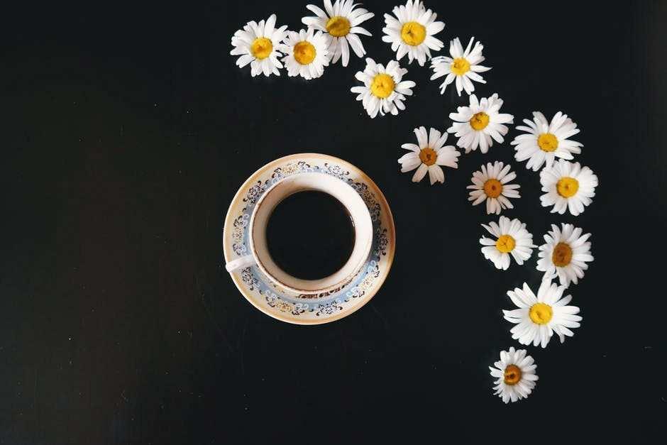 kahve papatyalar