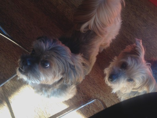 Happy pups, begging for more at Chez Stacey