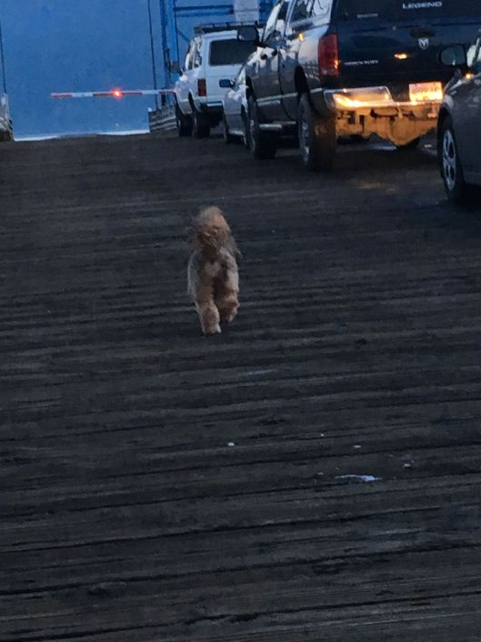 ginger on dock.jpg