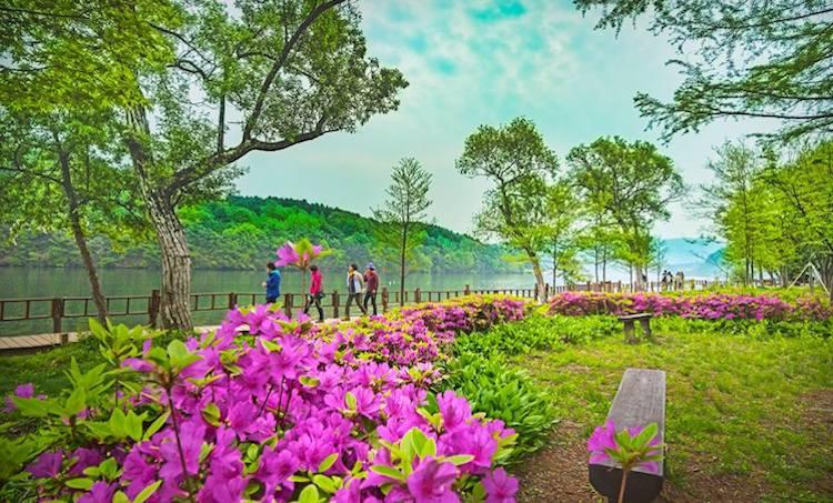 Nami Island | Chuncheon-si, Gangwon-do