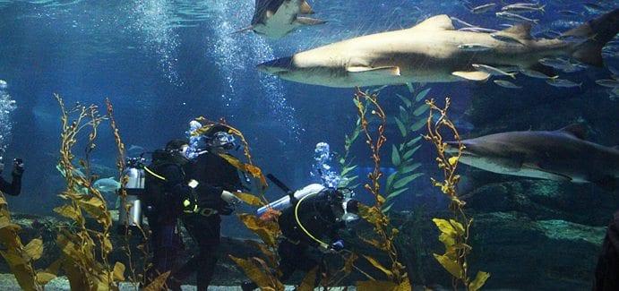 The 9 Best Busan Beach Activities To Do This Summer shark diving