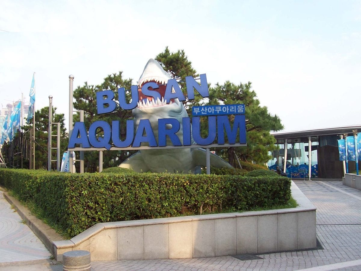 Busan Aquarium - aquariums in korea