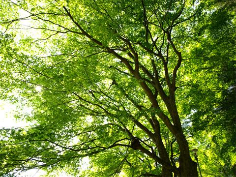 070522Gero_Onsen-ji04.jpg