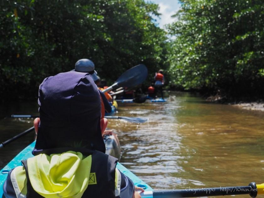 西表島 カヌー SUP マングローブ クルーズ ツアー