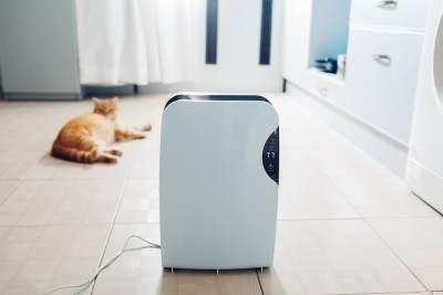 dehumidifier + cat
