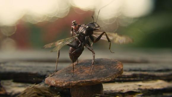 Antony the ant
