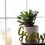 How to Properly Clean Indoor Plants