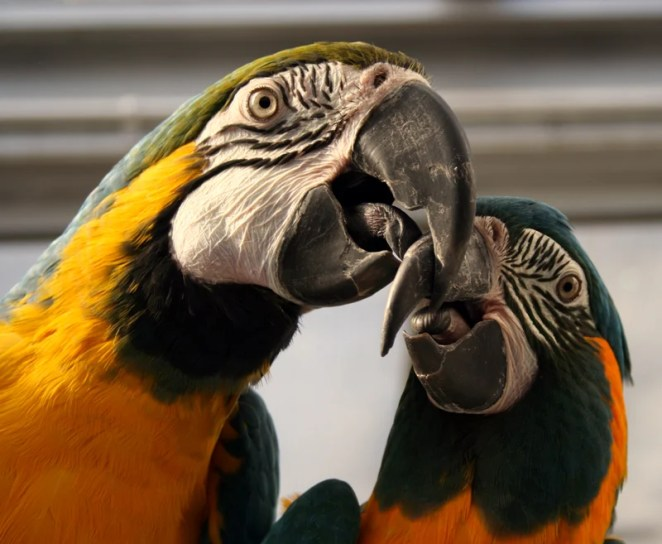 10 Longest Life Span Animals: Macaws