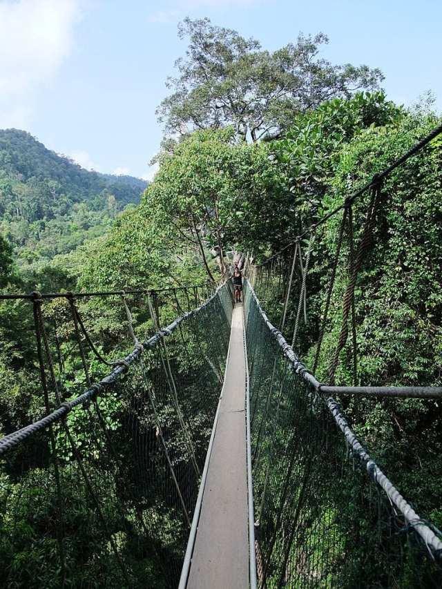 Taman Negara Canopy Walkway, Malaysia