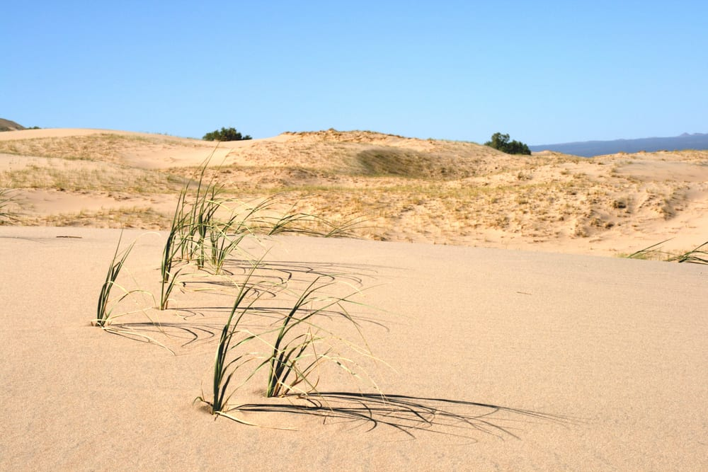Most Silent Places - Kelso Dunes