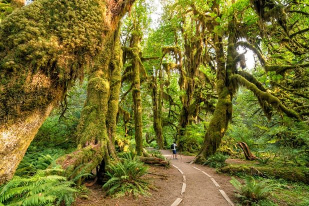 Most Silent Places - Olympic National Park