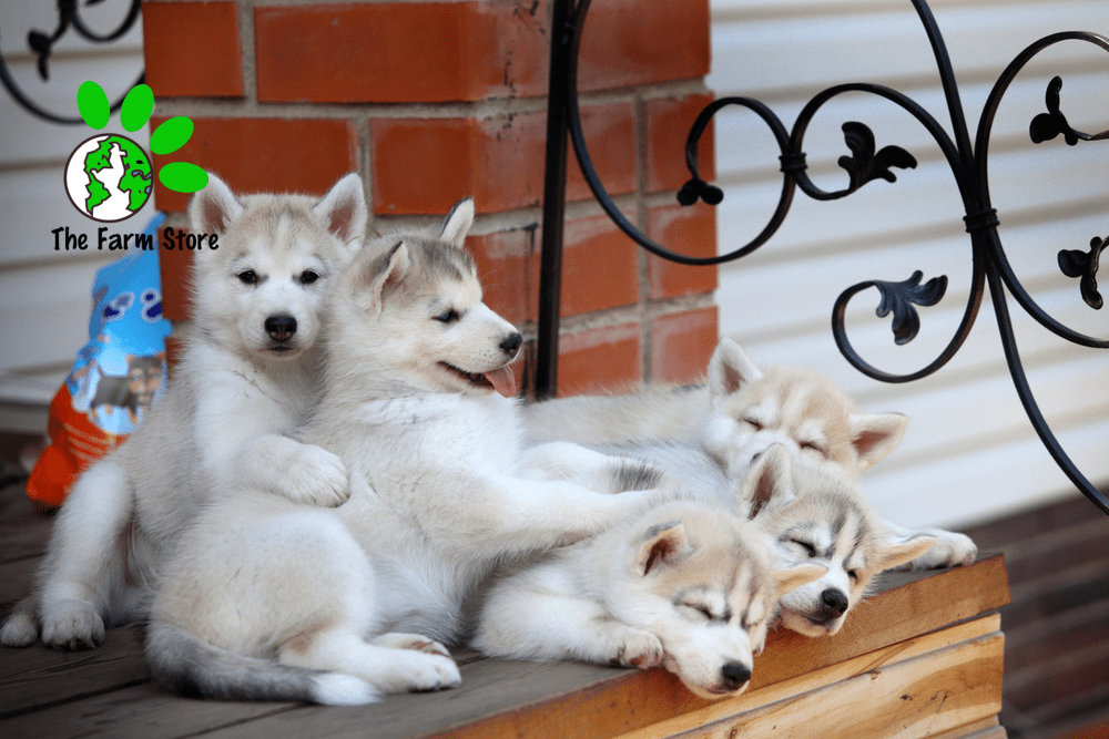 Best Dog Food for Husky Puppies 2021