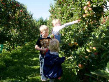 Appels plukken (1 van 1)