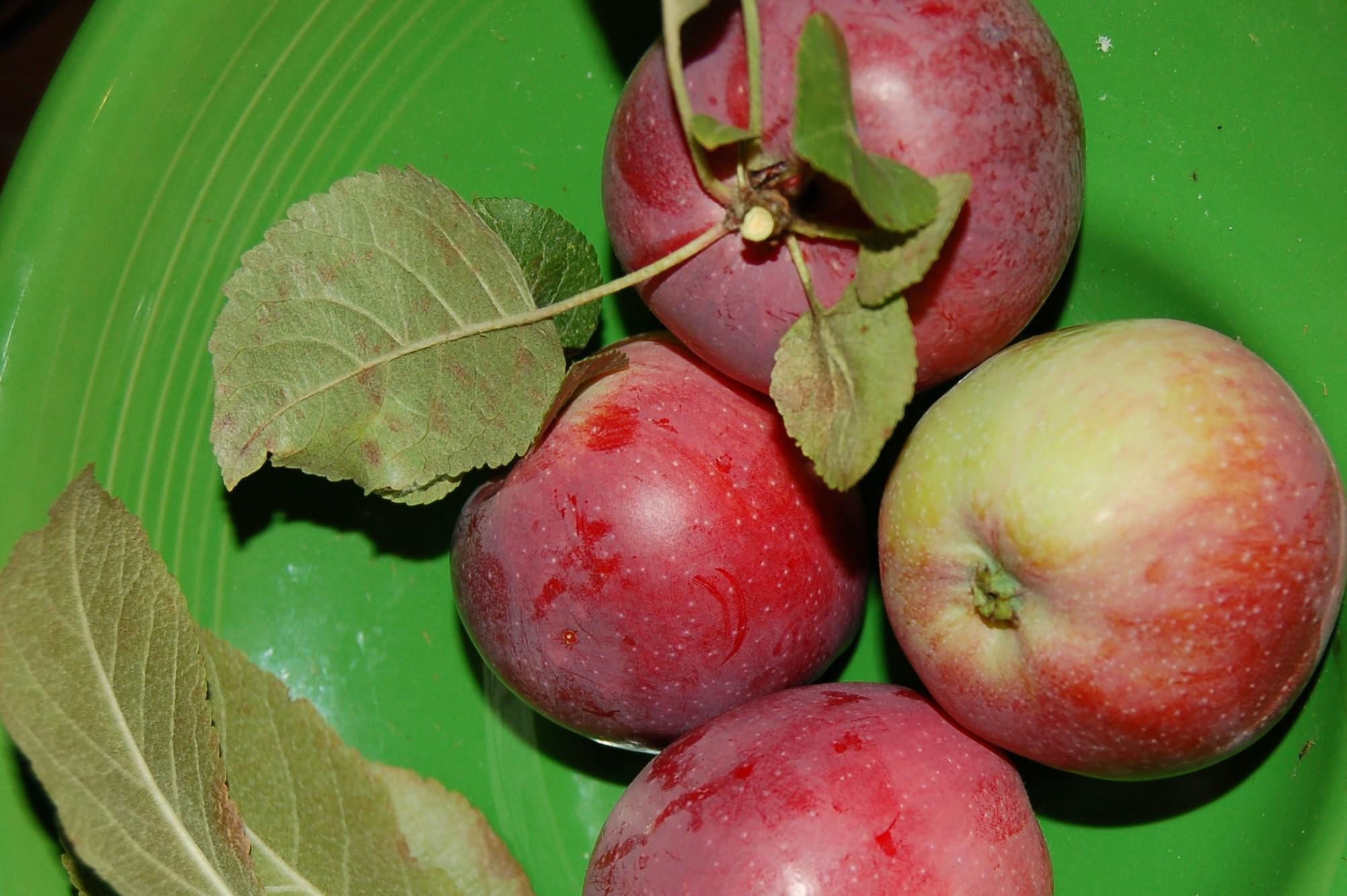 Tasty little red apples