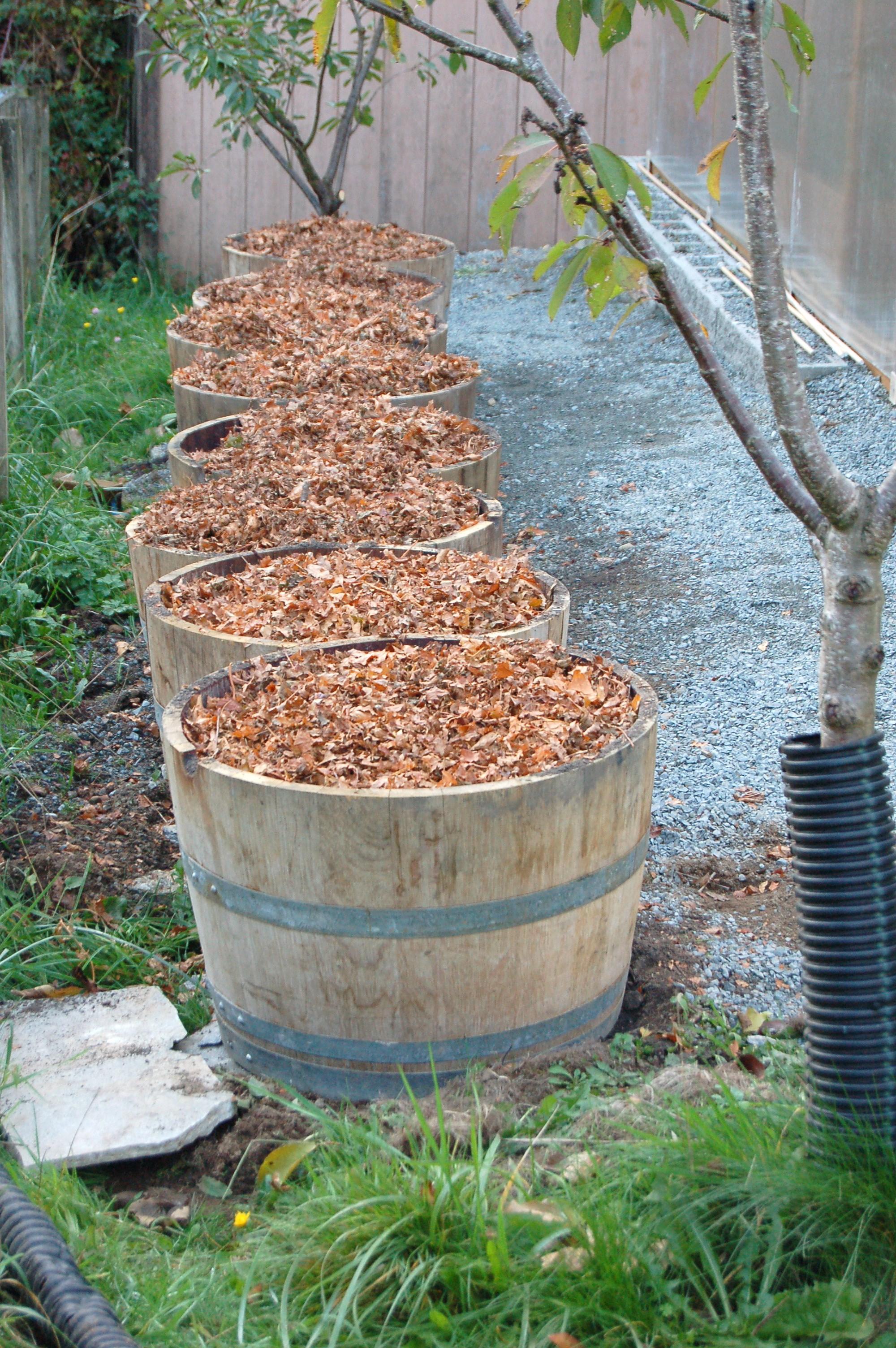 Row of eight rain barrels covered in leaf mulch