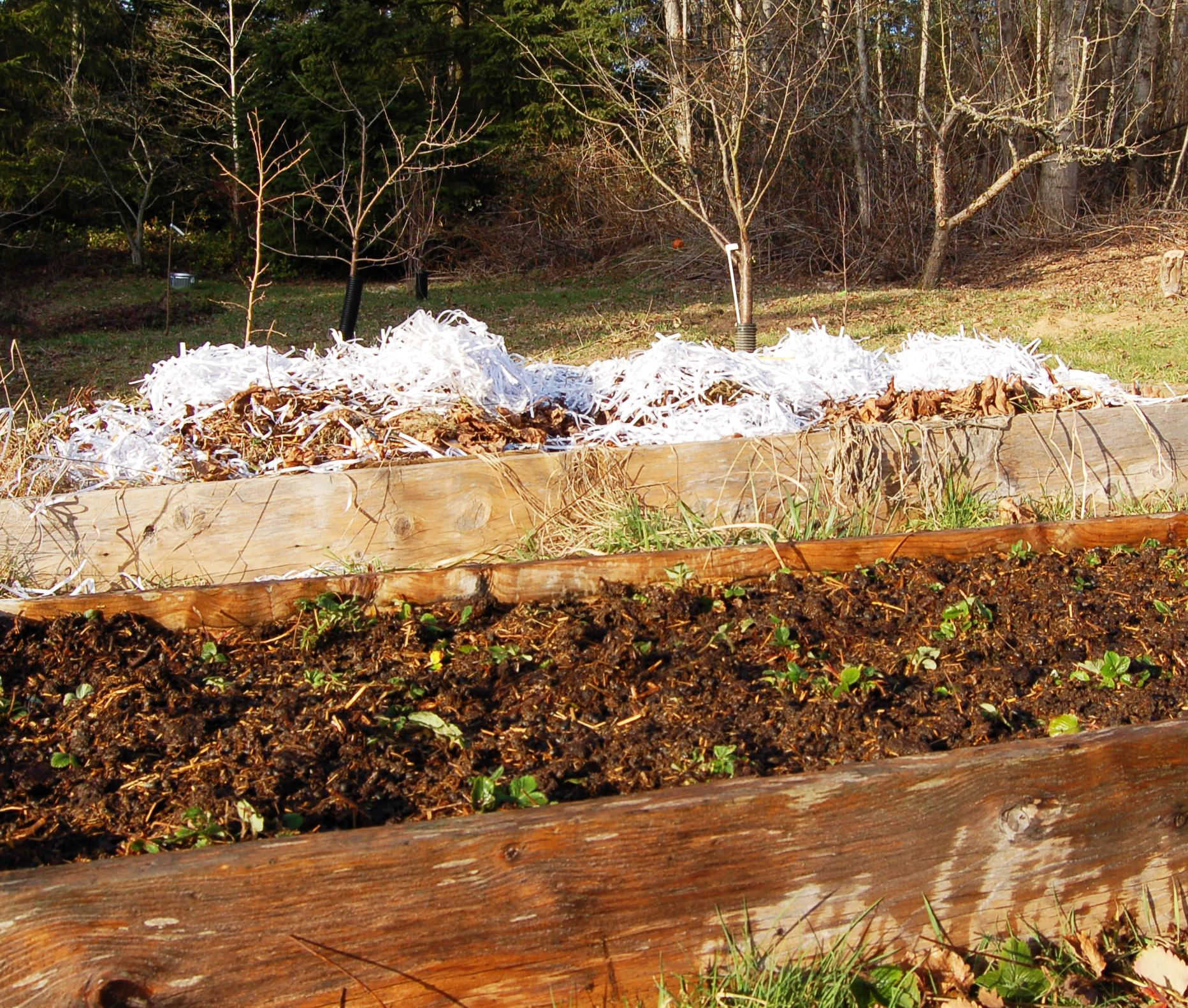 Strawberry bed, compost pile, and orchard