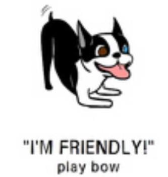 22playbow-e1438913702232