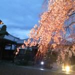 AQUOS CRYSTAL Xで夕暮れ時の桜を撮影
