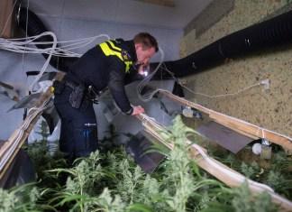 Inspectie hennepkwekerij