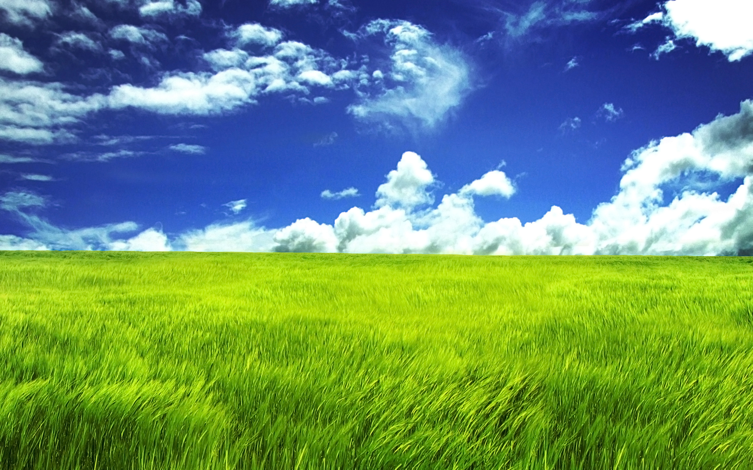 Blue sky and green field 25601600 wide wallpapers blue sky and green field 25601600 wide wallpapers voltagebd Gallery