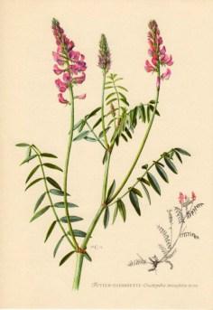 Petite Flore, contenant les plantes les plus communes, ainsi que les plantes utiles et nuisibles, par Gaston Bonnier. Médiathèque Troyes Champagne Métropole. Photo: Eric Bord