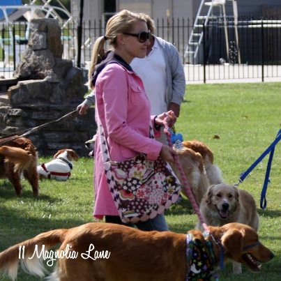 golden-retriever-leash