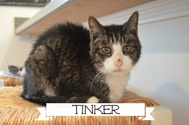 Tinker-marked