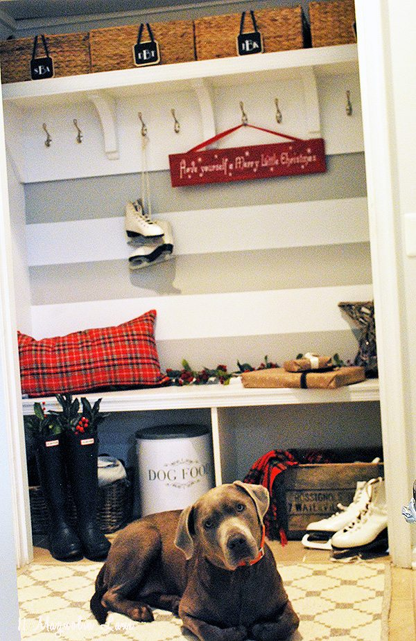 dog-mudroom-holiday