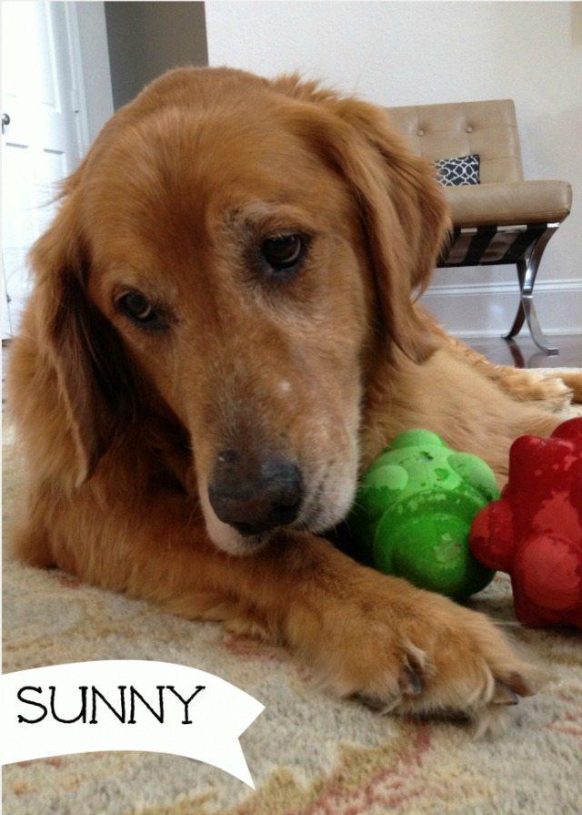 Sunny-749x1024