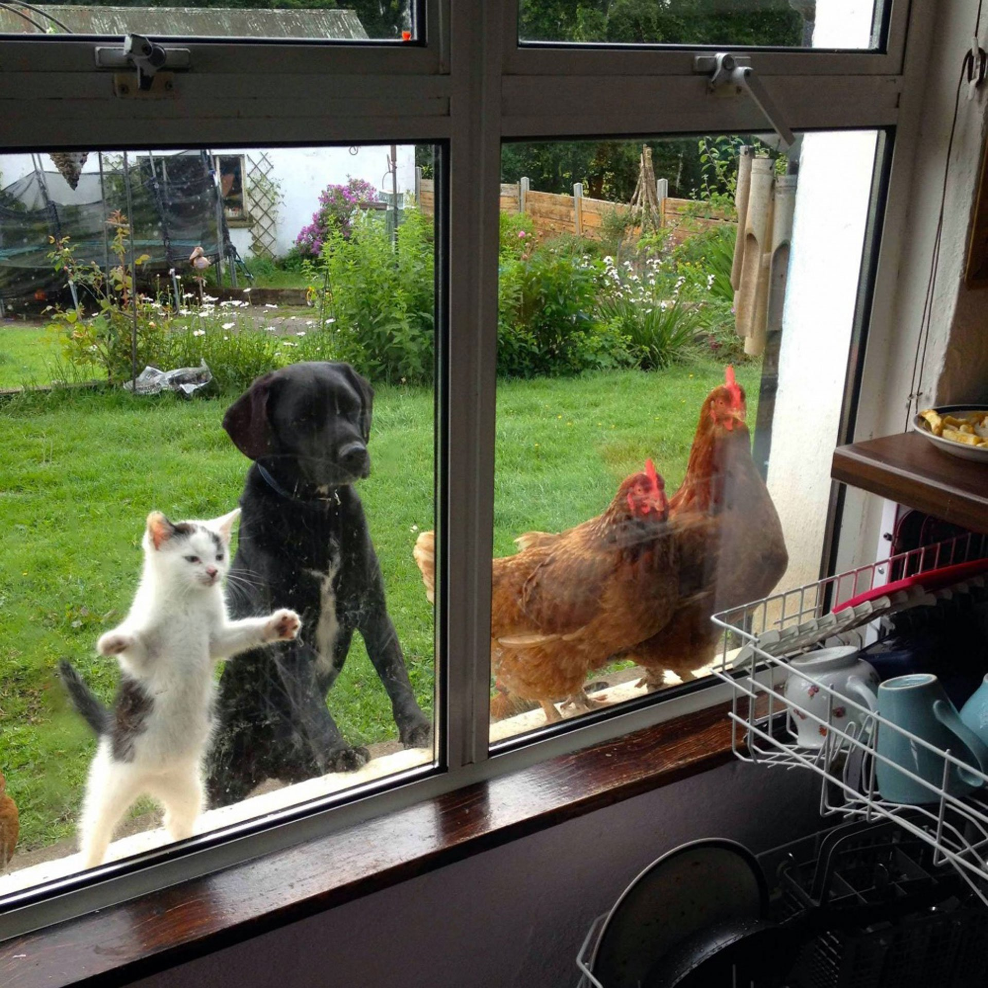 11 Most Funny animals that beg to be let into the house