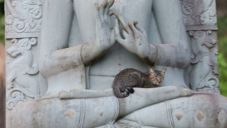 11 Images that prove cats love statues
