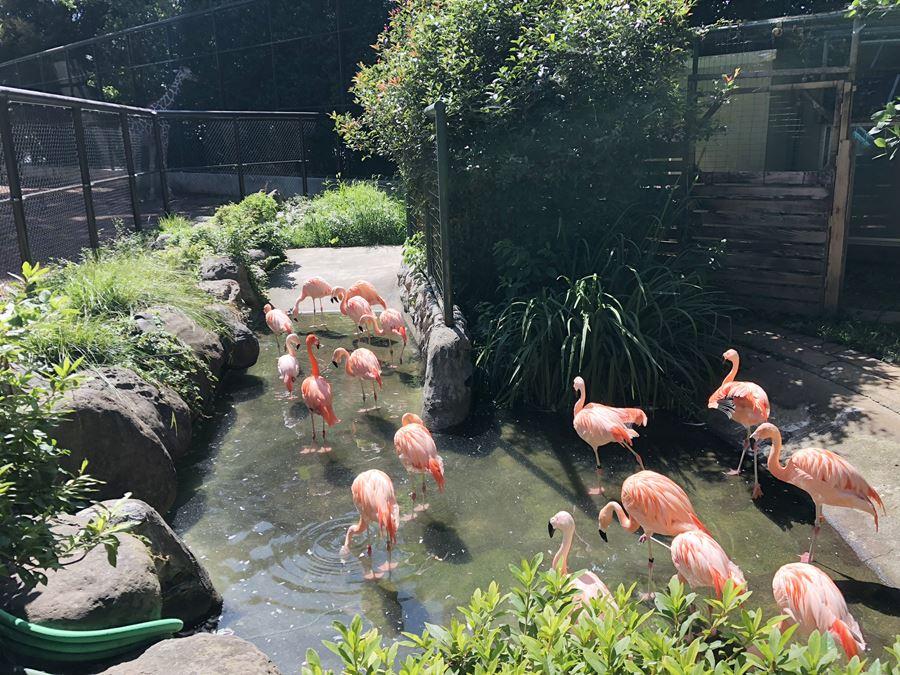 野毛山動物園のフラミンゴ