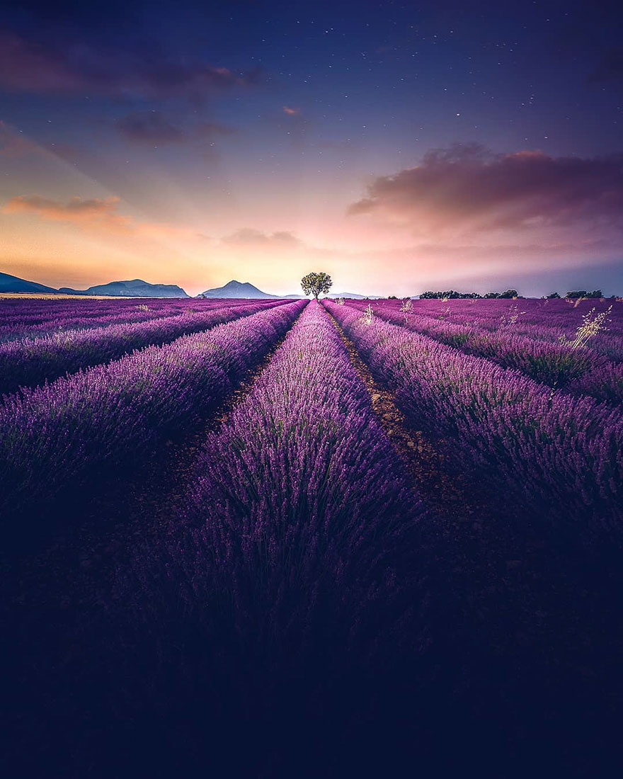 Stunning Landscapes Of A Lavender Field In Southern France By Samir Belhamra