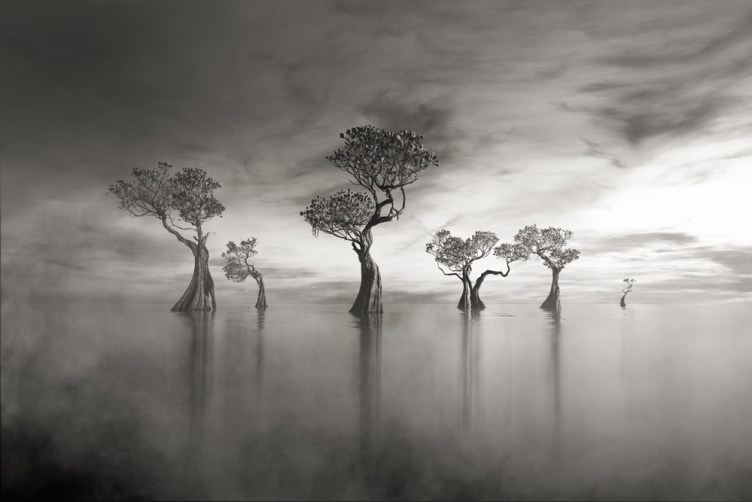 Winners Of Black and White Photo Competition By Masters Of Photography