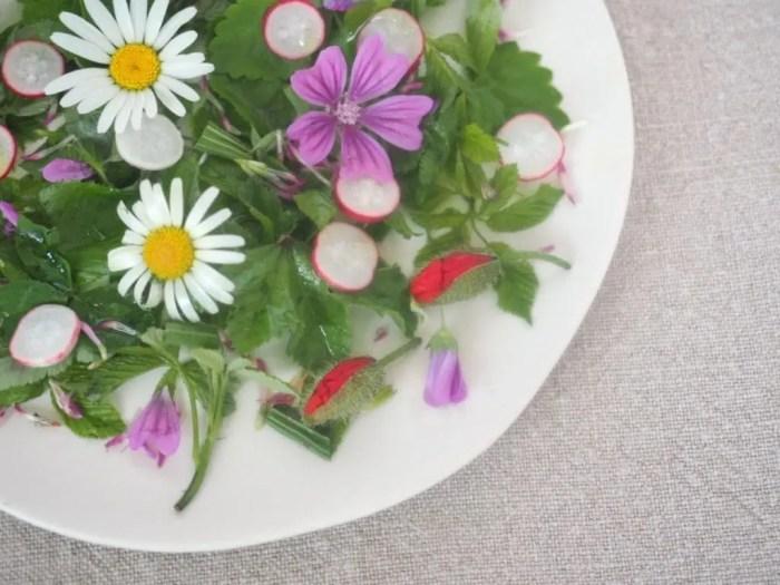 salade sauvage de printemps