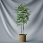 Plant Tree Leaves