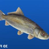 Fish (low Poly)