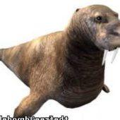 Walrus Seal