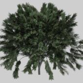 Realistic Tree Tropical