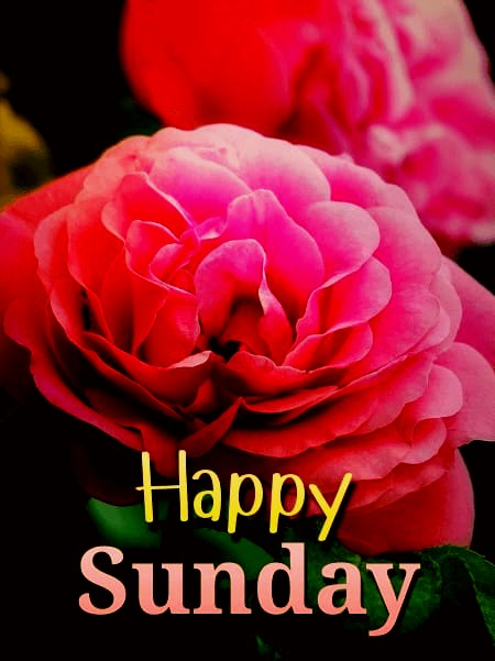 Good morning sunday with flower images