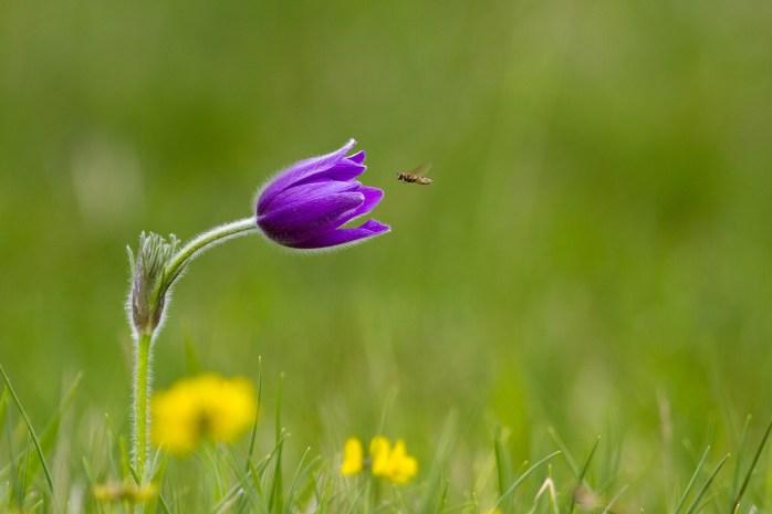 macro-photography-flower-wallpaper