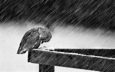 rainy weather 2