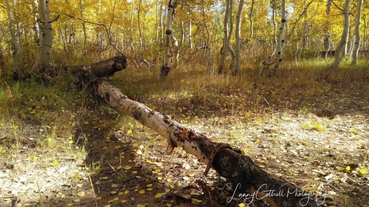 fallen tree-1499100580642