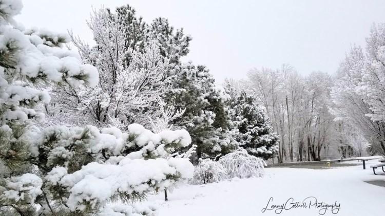 winter photo 5-1518586019477