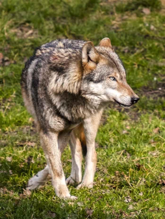 animal canine carnivore dog